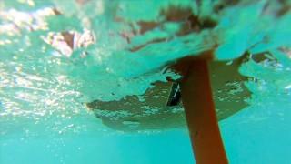 """Peanut Butter"" a film by Leah Dawson, The Sea Appreciation Project"